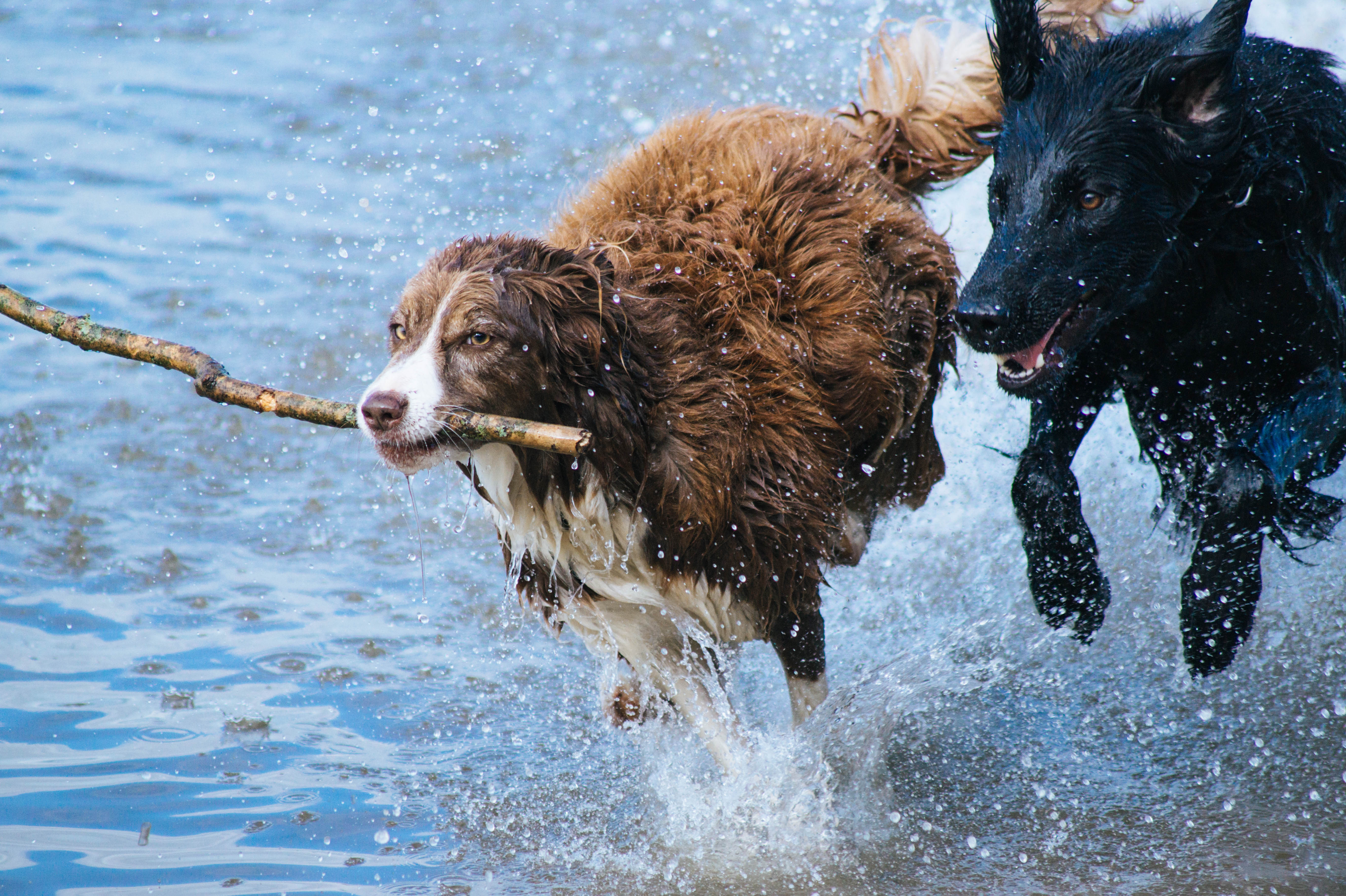 Dogs cooling off in the water!
